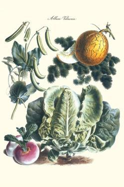Vegetables; Melon, Lettuce, Green Beans, and Turnips by Philippe-Victoire Leveque de Vilmorin