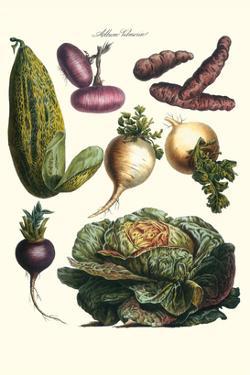 Vegetables; Melon, Onion, Cabbage, Potato, Raddish by Philippe-Victoire Leveque de Vilmorin