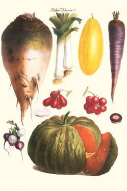 Vegetables: Melon, Purple Carrot, Cherry Tomatoes, Onions, Turnip, Leek by Philippe-Victoire Leveque de Vilmorin