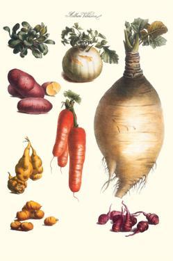 Vegetables; Onion, Potato, Carrot, Roots, Tubers by Philippe-Victoire Leveque de Vilmorin