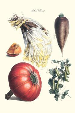 Vegetables; Peas, Melon, Brussel Sprouts, Gourb, by Philippe-Victoire Leveque de Vilmorin
