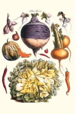 Vegetables; Peppers, Onion, Raddish, Tubers, Pumpkin, and Lettuce by Philippe-Victoire Leveque de Vilmorin