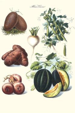 Vegetables; Potato, Melon, Raddish, Peas, Onions by Philippe-Victoire Leveque de Vilmorin