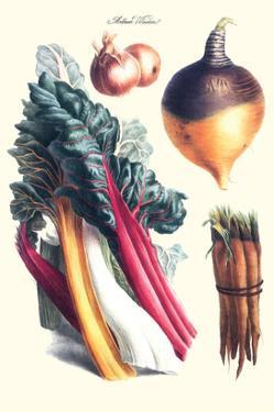 Vegetables; Rhubard, Carrot, Onion, Turnip by Philippe-Victoire Leveque de Vilmorin