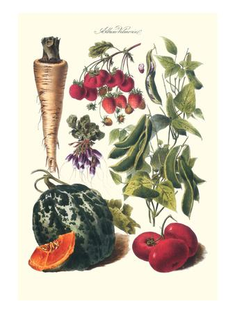 Vegetables; Strawberries, Beans, Tomato, Melon, and Raddish