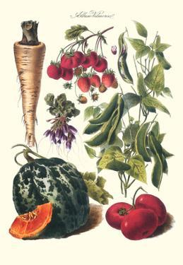 Vegetables; Strawberries, Beans, Tomato, Melon, and Raddish by Philippe-Victoire Leveque de Vilmorin