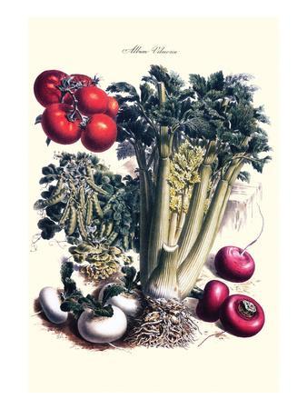 Vegetables; Turnip, Raddish, Tomato, Celery, and Peas