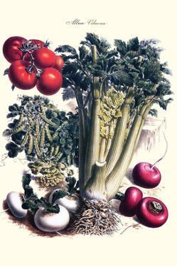 Vegetables; Turnip, Raddish, Tomato, Celery, and Peas by Philippe-Victoire Leveque de Vilmorin