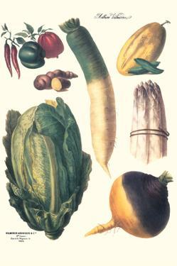 Vegetables; White Asparagus, Spago, Peppers, Cabbage, Turnip by Philippe-Victoire Leveque de Vilmorin