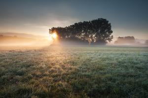 Foggy Sunrise by Photo by Steffen Egly