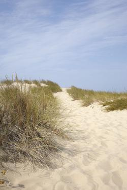 Sand Dunes and Dune Grass, Cap Ferret, Gironde, Aquitaine, France by photo division