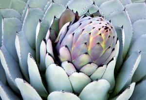 Aloe 2 by PhotoDF