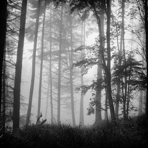 Luxulyan Lost by Photography by Dean Forrest