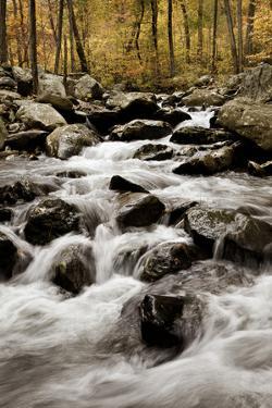 White Oak Canyon by Photography by Deb Snelson