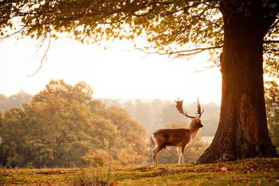 Deer by Photography By Sam C Moore