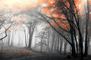 Autumn Woods by PhotoINC