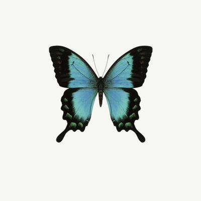 Blue Butterfly by PhotoINC