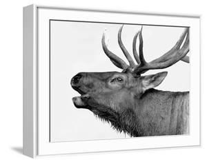 Deer by PhotoINC