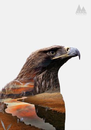Eagle by PhotoINC