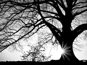 Old Tree by PhotoINC