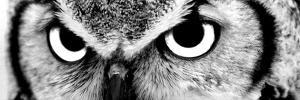 Owl by PhotoINC