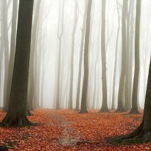 Autumn Forest Floor by PhotoINC Studio