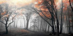 Autumn Woods by PhotoINC Studio