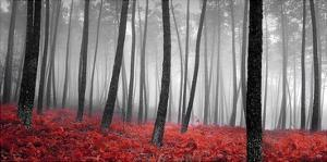 Autumn Woods by PhotoINC Studio