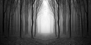 Dark Woods by PhotoINC Studio