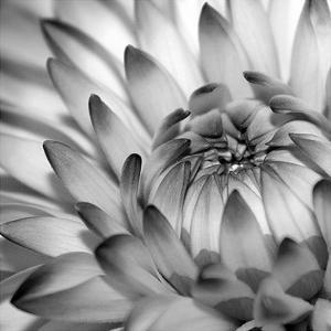 Fibonacci 2 by PhotoINC Studio