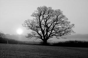 Meadow Tree by PhotoINC Studio
