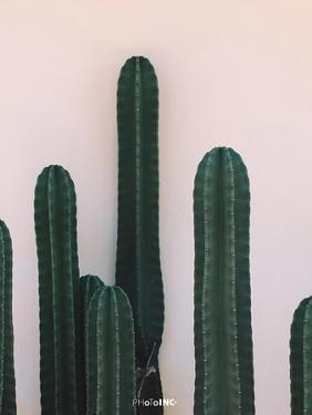 Naked Cactus by PhotoINC Studio