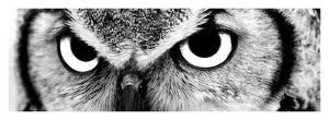 Owl by PhotoINC Studio
