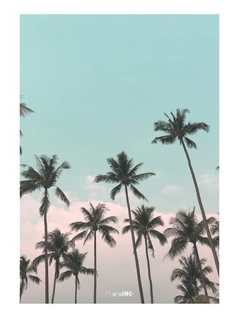 Palms in the City