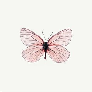 Pink Butterfly by PhotoINC Studio