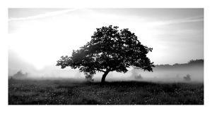 Solemn Tree by PhotoINC Studio