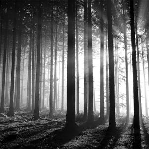 Wood Light by PhotoINC Studio