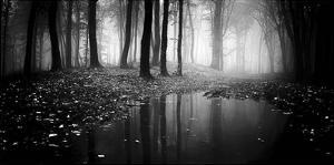 Woods by PhotoINC Studio