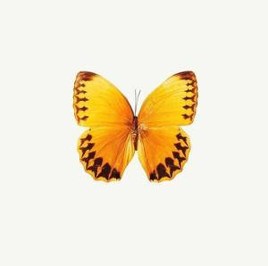 Yellow Butterfly by PhotoINC Studio