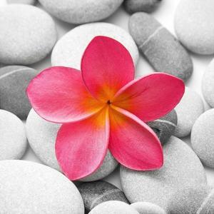 Zen Flower by PhotoINC Studio