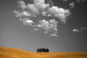 Toscana Landscape by PhotoINC
