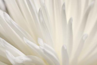 White Flower by PhotoINC