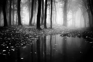 Woods by PhotoINC