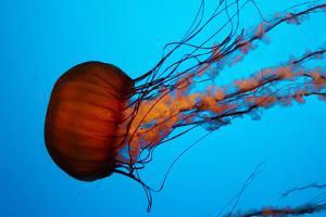 Jellyfish by photojohn830