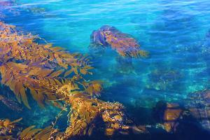 Kelp Forest by photojohn830