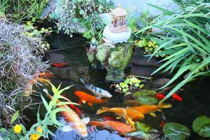 Koi Fish Garden by photojohn830