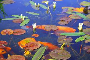 Lily Pad Pond by photojohn830