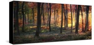 Autumn Woodland Sunrise by Photokes