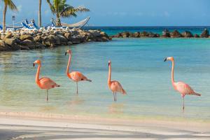 Four Flamingos on the Beach by PhotoSerg