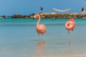 Two Flamingos on the Beach by PhotoSerg